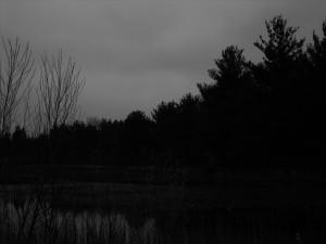 The goose ptg photo ref gray